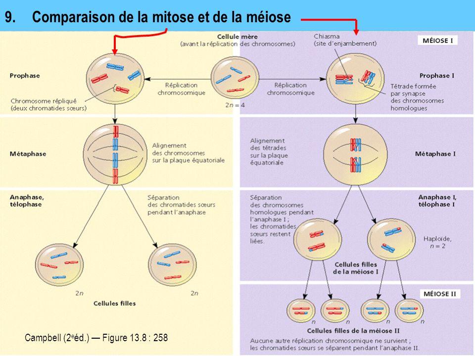 9. Comparaison de la mitose et de la méiose Campbell (2 e éd.) Figure 13.8 : 258