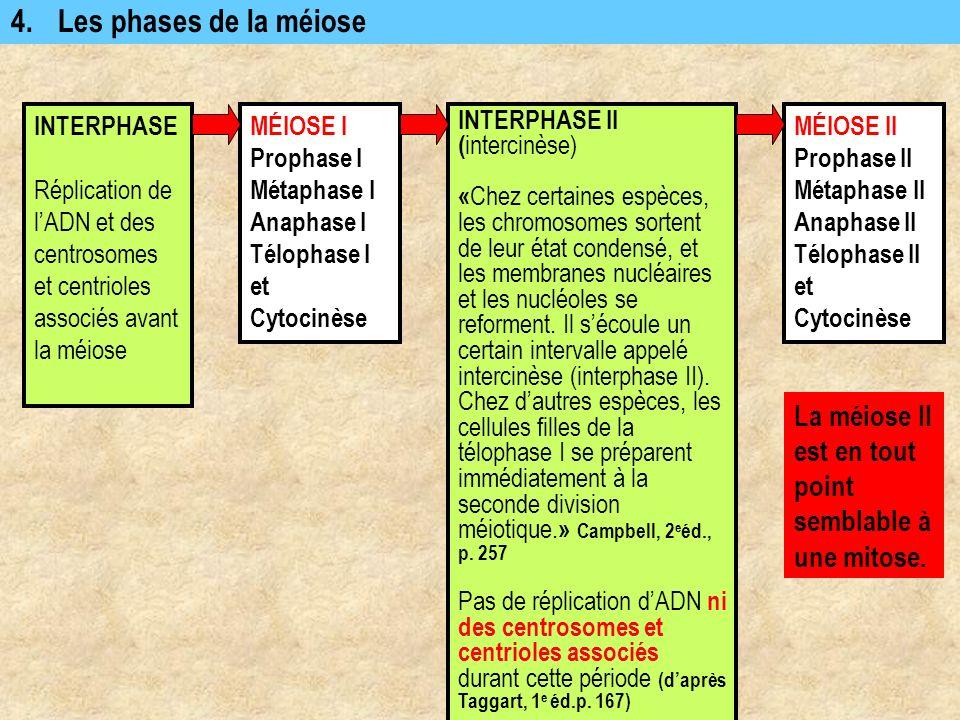 4.Les phases de la méiose INTERPHASE Réplication de lADN et des centrosomes et centrioles associés avant la méiose MÉIOSE I Prophase I Métaphase I Ana