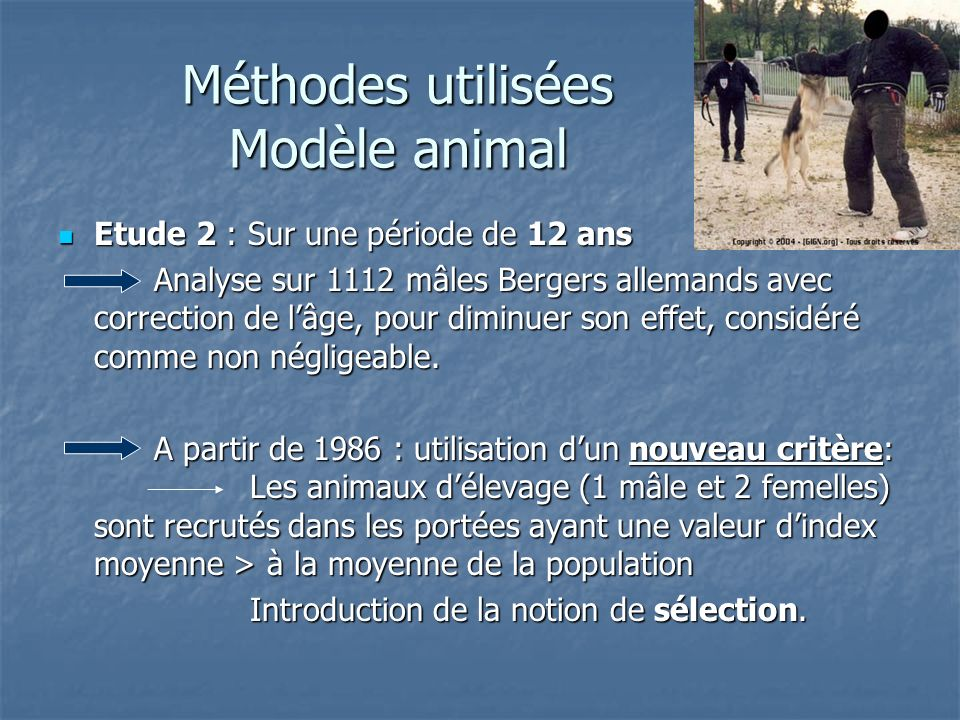 Méthodes utilisées Modèle animal Etude 2 : Sur une période de 12 ans Etude 2 : Sur une période de 12 ans Analyse sur 1112 mâles Bergers allemands avec correction de lâge, pour diminuer son effet, considéré comme non négligeable.