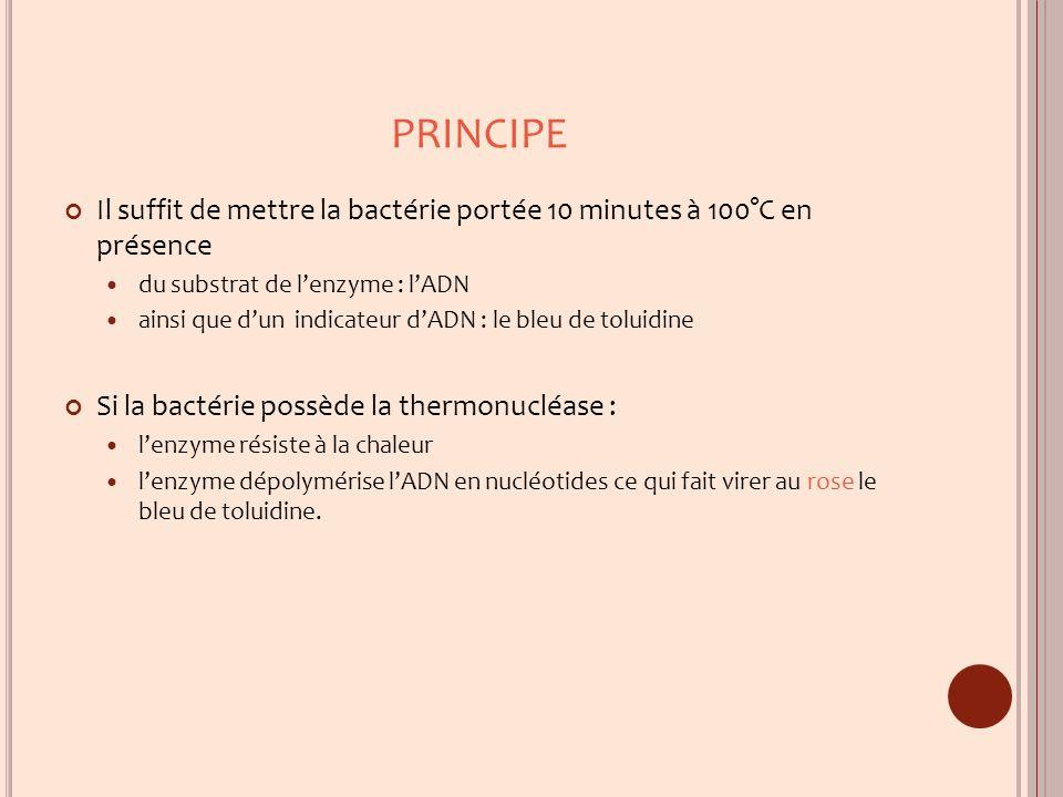 PRINCIPE Il suffit de mettre la bactérie portée 10 minutes à 100°C en présence du substrat de lenzyme : lADN ainsi que dun indicateur dADN : le bleu d