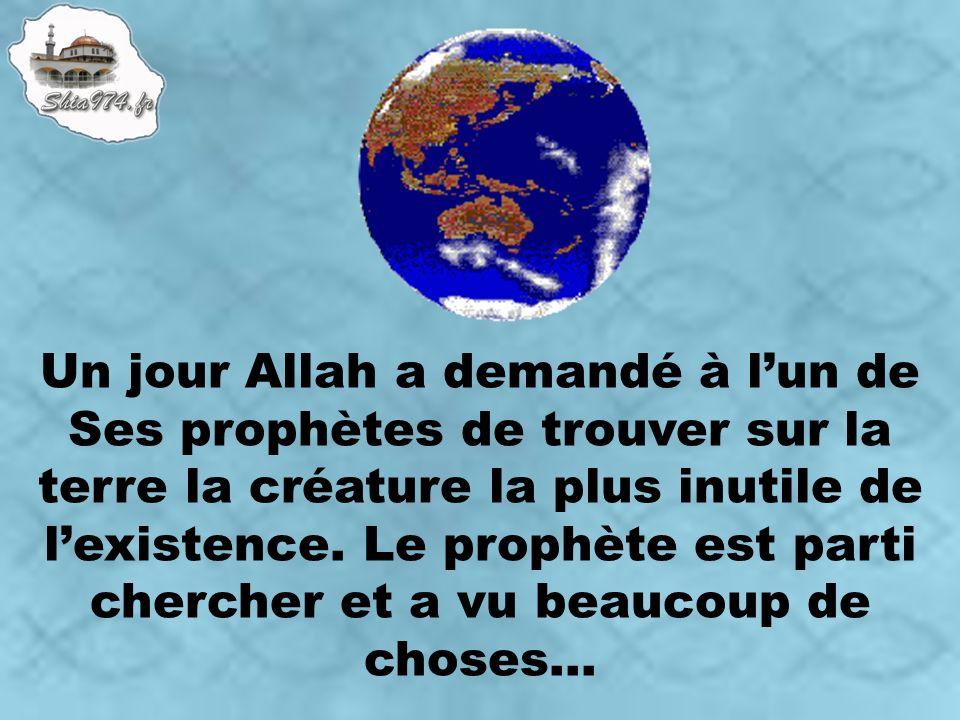 Un jour Allah a demandé à lun de Ses prophètes de trouver sur la terre la créature la plus inutile de lexistence.