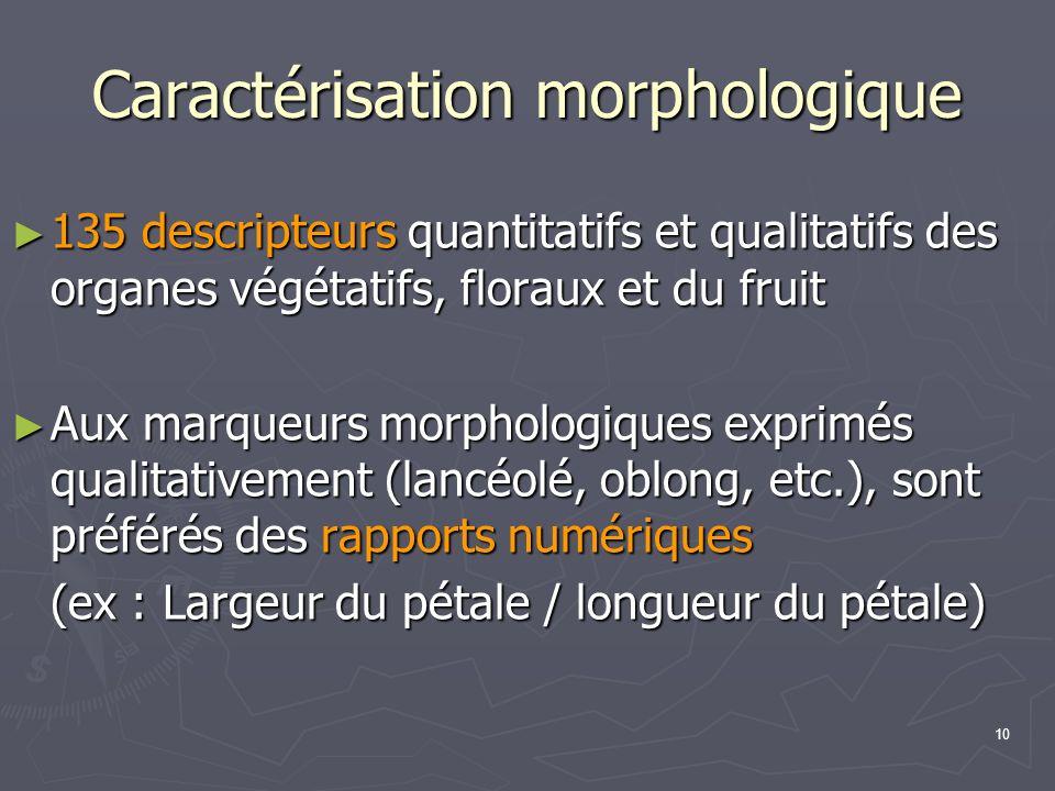 10 Caractérisation morphologique 135 descripteurs quantitatifs et qualitatifs des organes végétatifs, floraux et du fruit 135 descripteurs quantitatif