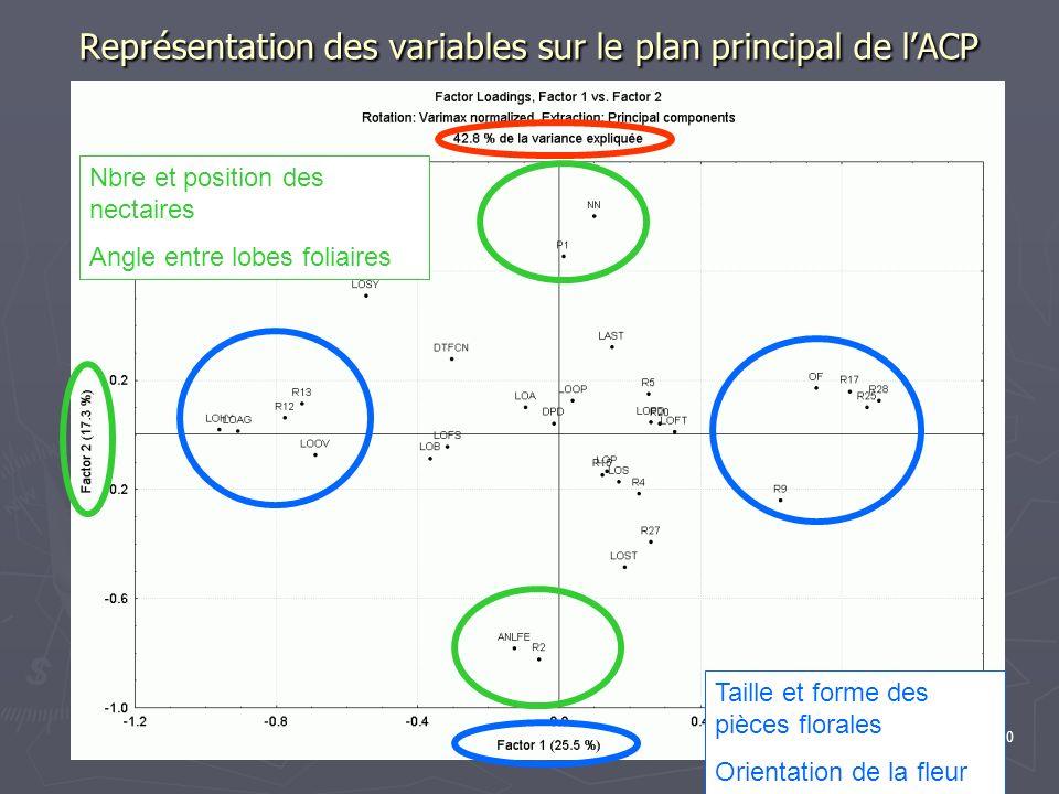 20 Représentation des variables sur le plan principal de lACP Taille et forme des pièces florales Orientation de la fleur Nbre et position des nectair