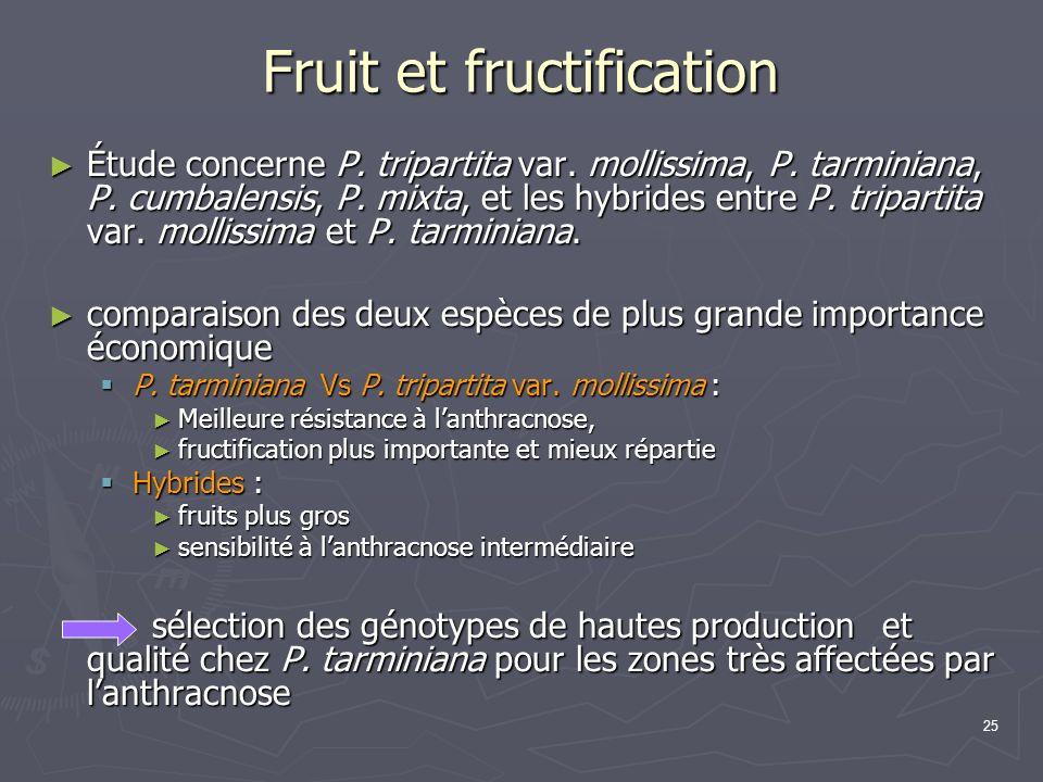 25 Fruit et fructification Étude concerne P. tripartita var. mollissima, P. tarminiana, P. cumbalensis, P. mixta, et les hybrides entre P. tripartita