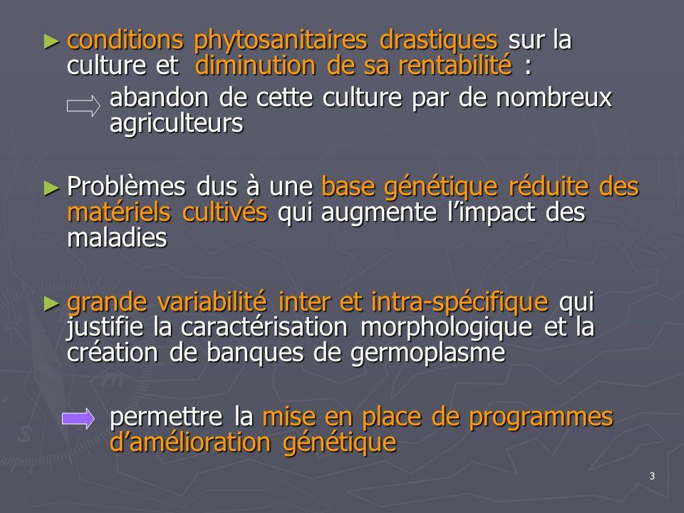 3 conditions phytosanitaires drastiques sur la culture et diminution de sa rentabilité : conditions phytosanitaires drastiques sur la culture et dimin