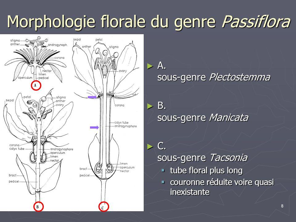 8 Morphologie florale du genre Passiflora A. sous-genre Plectostemma A. sous-genre Plectostemma B. sous-genre Manicata B. sous-genre Manicata C. sous-