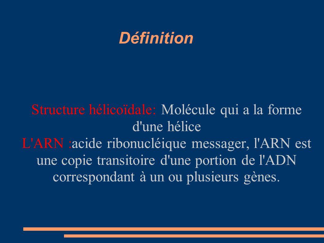 Définition Structure hélicoïdale: Molécule qui a la forme d une hélice L ARN :acide ribonucléique messager, l ARN est une copie transitoire d une portion de l ADN correspondant à un ou plusieurs gènes.