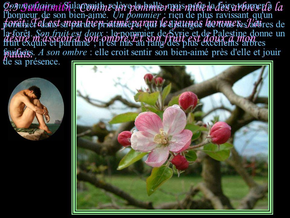 2:2 Salomon : Comme un lis au milieu des épines, Telle est mon amie parmi les jeunes filles.