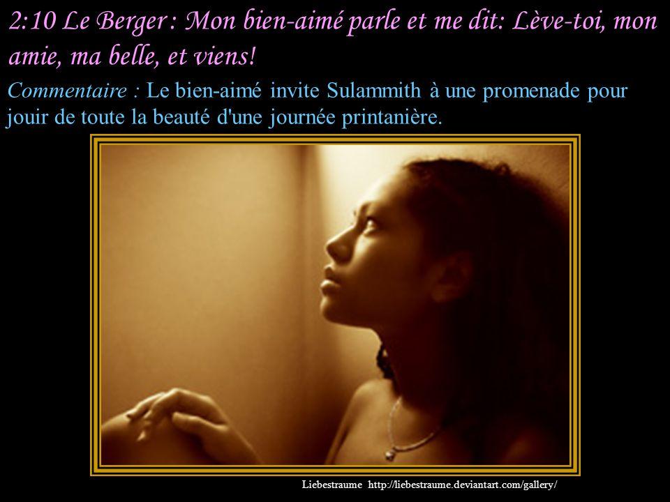 2:9 Sulammith : Mon bien-aimé est semblable à la gazelle Ou au faon des biches. Le voici, il est derrière notre mur, Il regarde par la fenêtre, Il reg