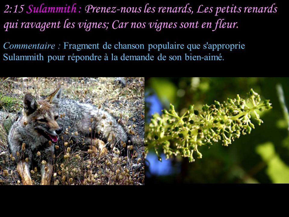 2:14 Le Berger : Ma colombe, qui te tiens dans les fentes du rocher, Qui te caches dans les parois escarpées, Fais-moi voir ta figure, Fais-moi entend