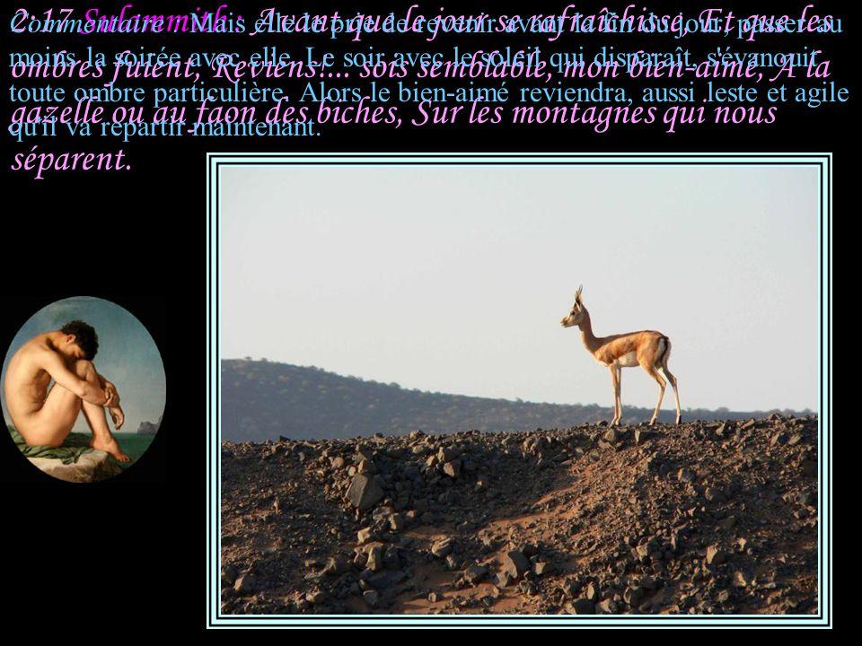 2:16 Sulammith : Mon bien-aimé est à moi, et je suis à lui; Il fait paître son troupeau parmi les lis. Commentaire : Sulammith, obligée de refuser l'i