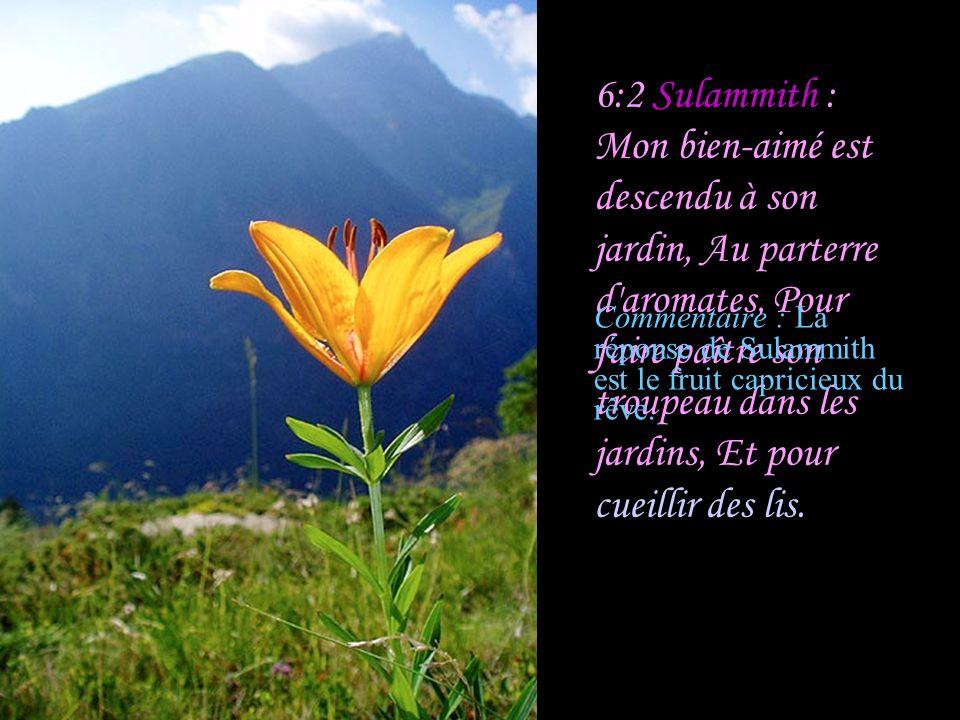6:1 Les jeunes filles : Où est allé ton bien-aimé, O la plus belle des femmes.