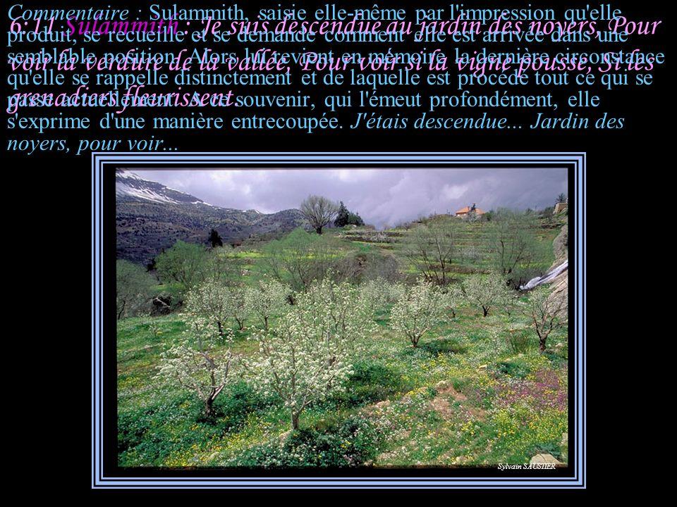 6:10 Salomon : Qui est celle qui apparaît comme l'aurore, Belle comme la lune, pure comme le soleil, Mais terrible comme des troupes sous leurs banniè