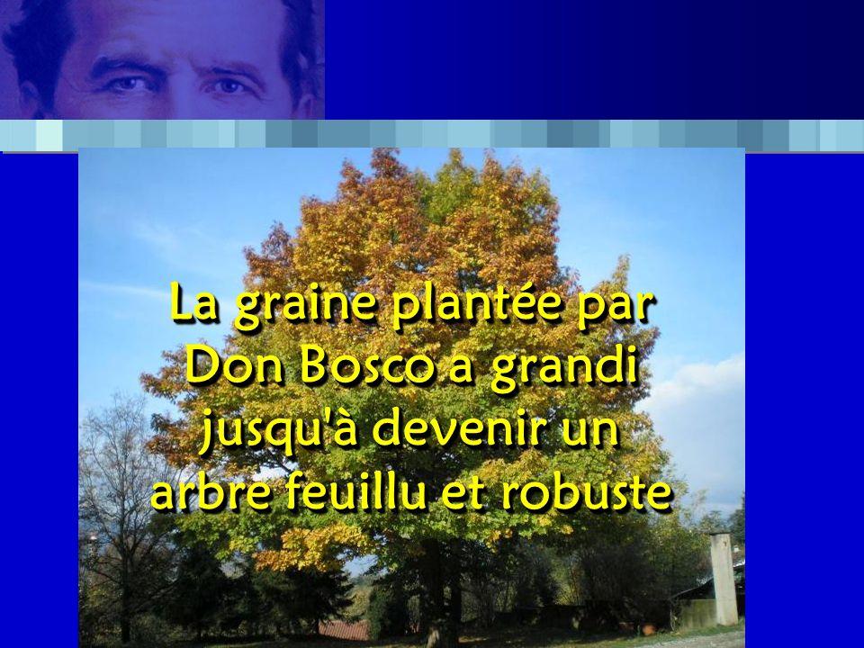 La graine plantée par Don Bosco a grandi jusqu à devenir un arbre feuillu et robuste La graine plantée par Don Bosco a grandi jusqu à devenir un arbre feuillu et robuste