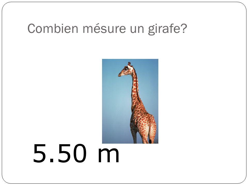Combien mésure un girafe? 5.50 m