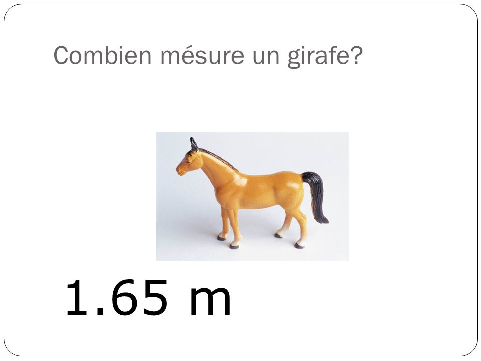 Combien mésure un girafe? 1.65 m