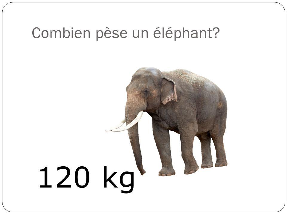 Combien pèse un éléphant? 120 kg