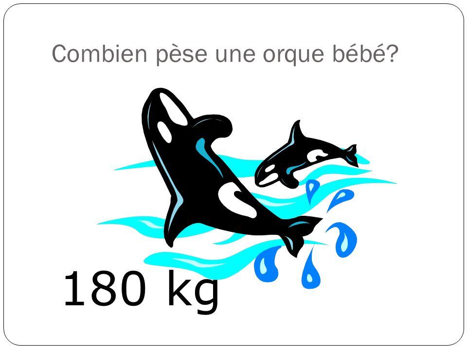 Combien pèse un guépard? 50 kg