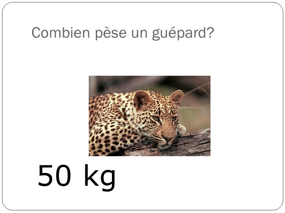 Combien pèse une mouche? 0.01 g