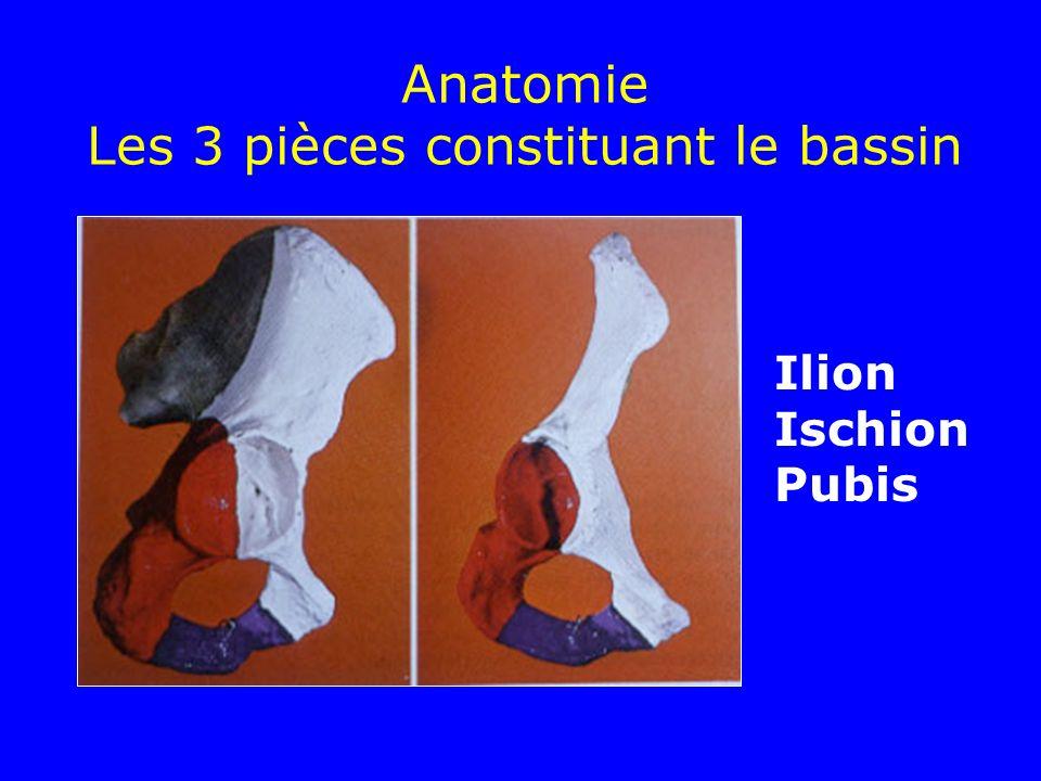 Anatomie Les 3 pièces constituant le bassin Ilion Ischion Pubis