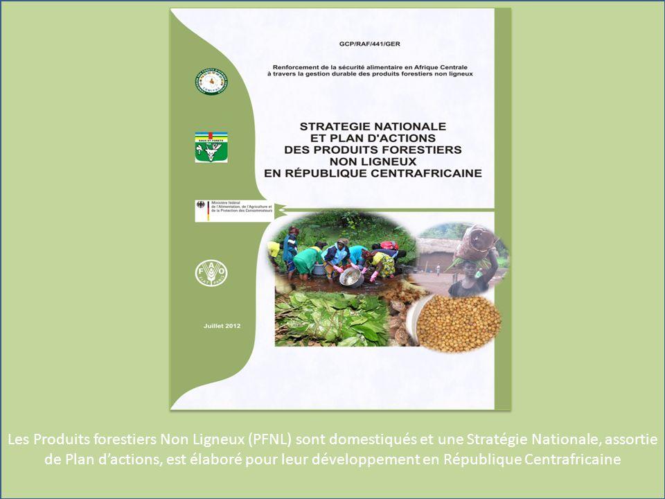 Les Produits forestiers Non Ligneux (PFNL) sont domestiqués et une Stratégie Nationale, assortie de Plan dactions, est élaboré pour leur développement en République Centrafricaine