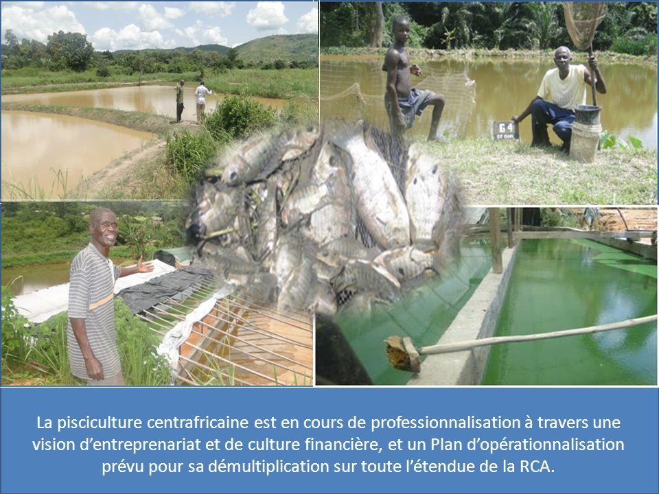 La pisciculture centrafricaine est en cours de professionnalisation à travers une vision dentreprenariat et de culture financière, et un Plan dopérationnalisation prévu pour sa démultiplication sur toute létendue de la RCA.