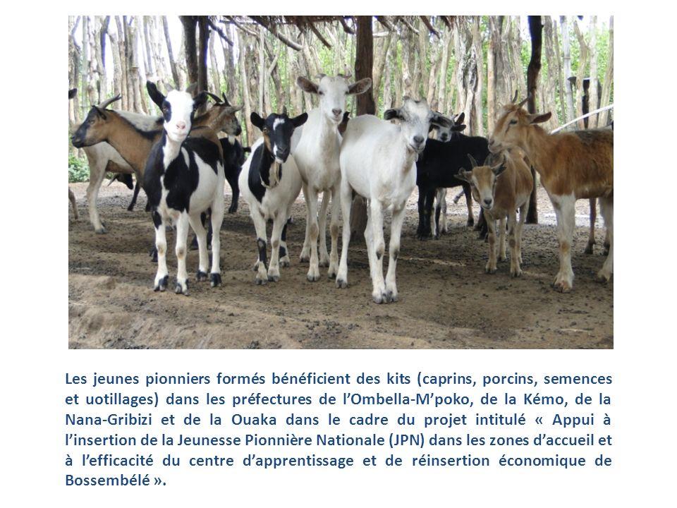 Les jeunes pionniers formés bénéficient des kits (caprins, porcins, semences et uotillages) dans les préfectures de lOmbella-Mpoko, de la Kémo, de la Nana-Gribizi et de la Ouaka dans le cadre du projet intitulé « Appui à linsertion de la Jeunesse Pionnière Nationale (JPN) dans les zones daccueil et à lefficacité du centre dapprentissage et de réinsertion économique de Bossembélé ».