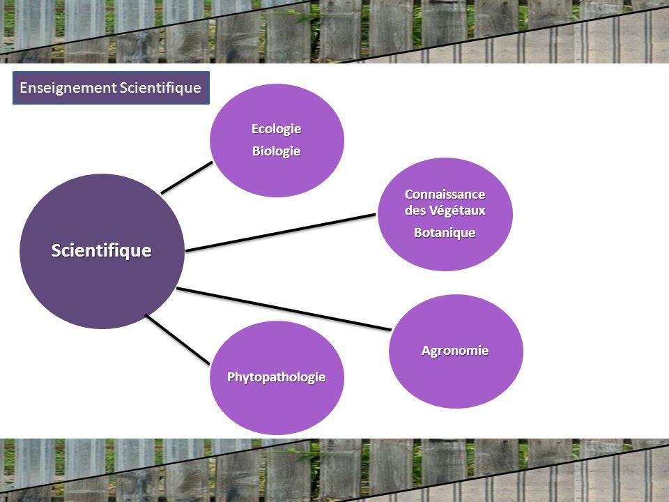 Scientifique EcologieBiologie Phytopathologie Agronomie Connaissance des Végétaux Botanique Enseignement Scientifique