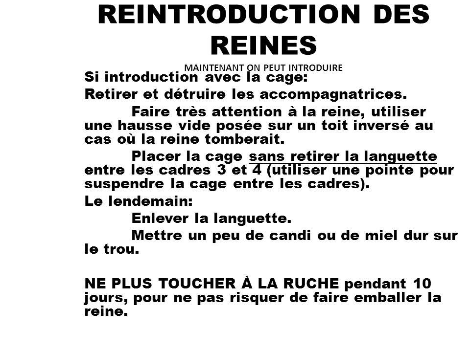 REINTRODUCTION DES REINES MAINTENANT ON PEUT INTRODUIRE Si introduction avec la cage: Retirer et détruire les accompagnatrices.