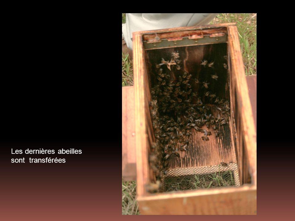 Les dernières abeilles sont transférées