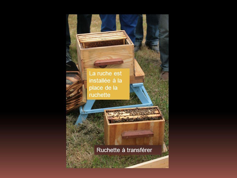La ruche est installée à la place de la ruchette Ruchette à transférer