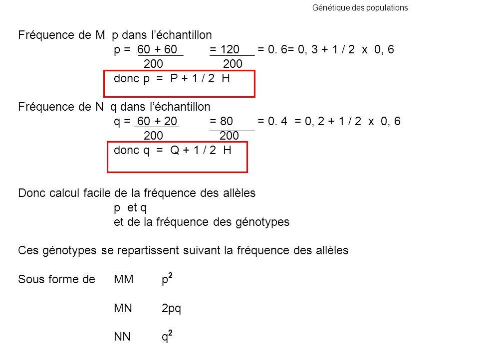 Génétique des populations Fréquence de M p dans léchantillon p = 60 + 60 = 120= 0. 6= 0, 3 + 1 / 2 x 0, 6 200 200 donc p = P + 1 / 2 H Fréquence de N