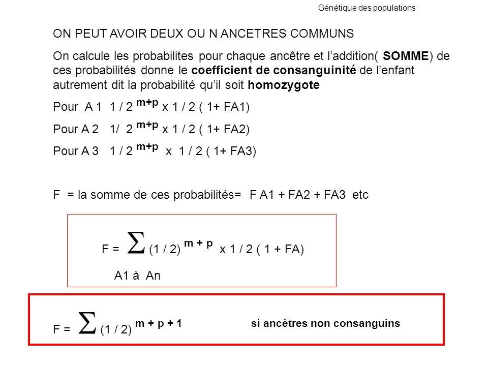 Génétique des populations ON PEUT AVOIR DEUX OU N ANCETRES COMMUNS On calcule les probabilites pour chaque ancêtre et laddition( SOMME) de ces probabi