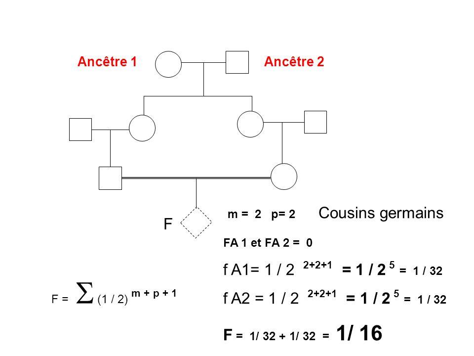 Ancêtre 1Ancêtre 2 F m = 2 p= 2 Cousins germains FA 1 et FA 2 = 0 f A1= 1 / 2 2+2+1 = 1 / 2 5 = 1 / 32 f A2 = 1 / 2 2+2+1 = 1 / 2 5 = 1 / 32 F = 1/ 32
