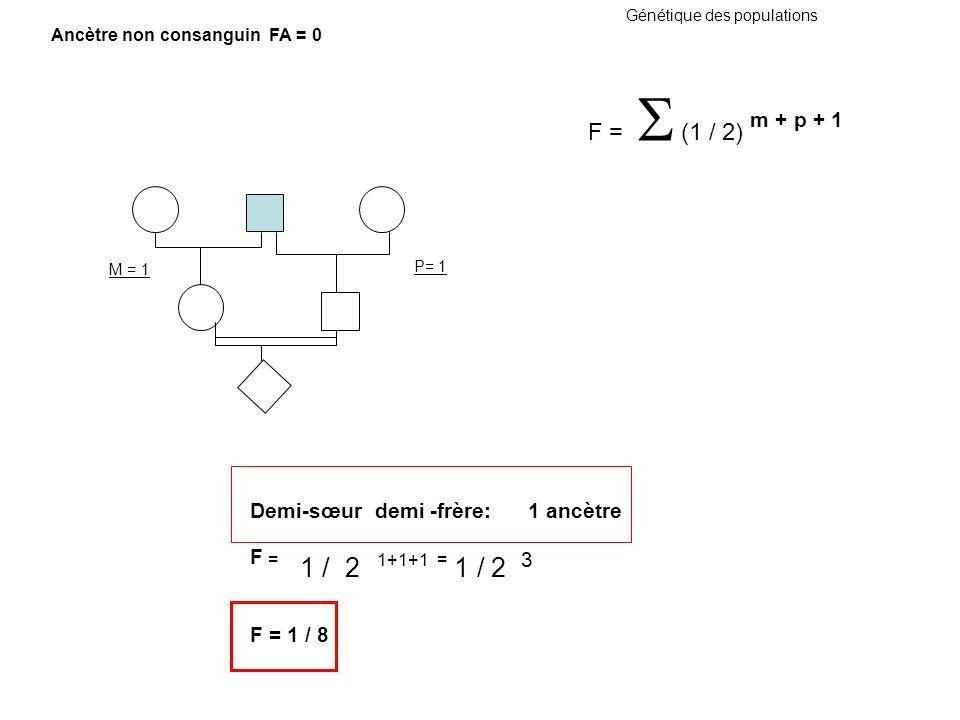 Génétique des populations M = 1 P= 1 Demi-sœur demi -frère: 1 ancètre F = 1 / 2 1+1+1 = 1 / 2 3 F = 1 / 8 F = (1 / 2) m + p + 1 Ancètre non consanguin