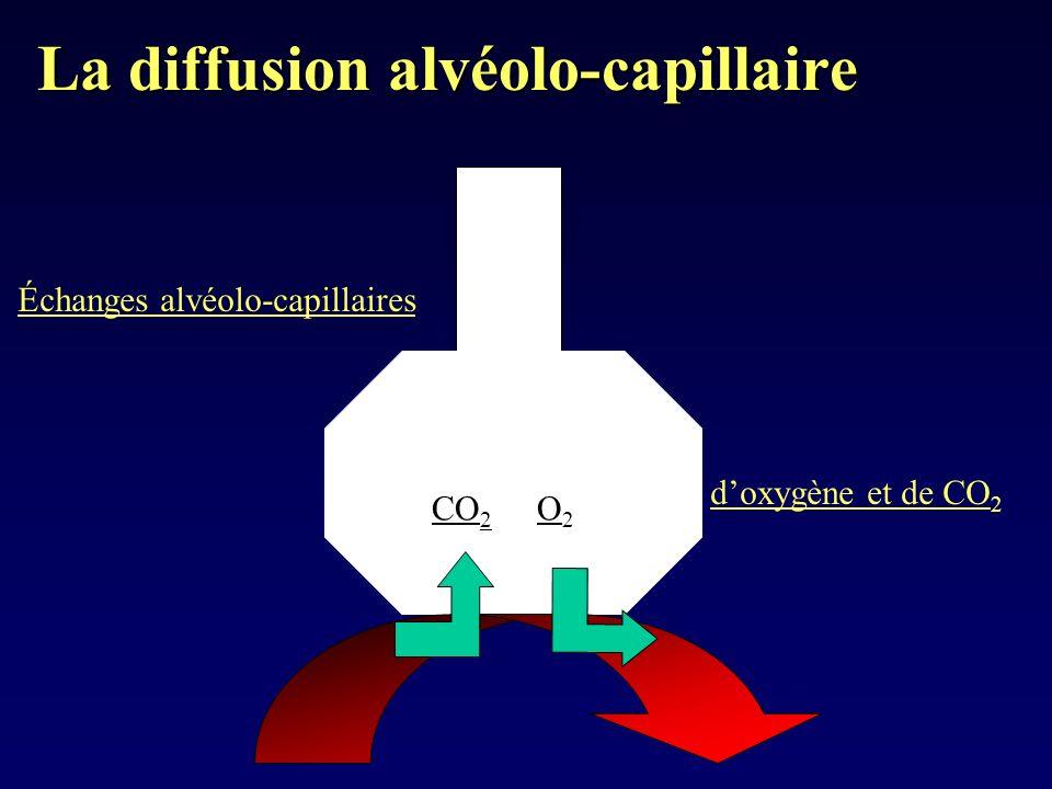 La diffusion alvéolo-capillaire CO 2 O2O2 Échanges alvéolo-capillaires doxygène et de CO 2