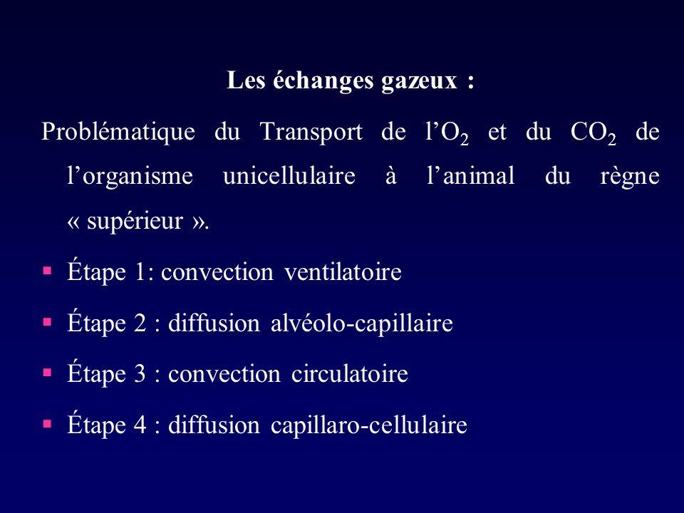 Les échanges gazeux : Problématique du Transport de lO 2 et du CO 2 de lorganisme unicellulaire à lanimal du règne « supérieur ».