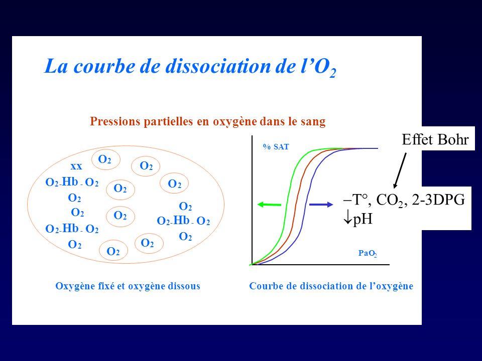 La courbe de dissociation de lO 2 O 2 O 2 O 2 O 2 O 2 O 2 O 2 O 2- Hb - O 2 O 2 O 2 O 2- - O 2 O 2 xx O 2- Hb - O 2 O 2 O 2 Oxygène fixé et oxygène dissous % SAT PaO 2 Courbe de dissociation de loxygène Pressions partielles en oxygène dans le sang T°, CO 2, 2-3DPG pH Effet Bohr