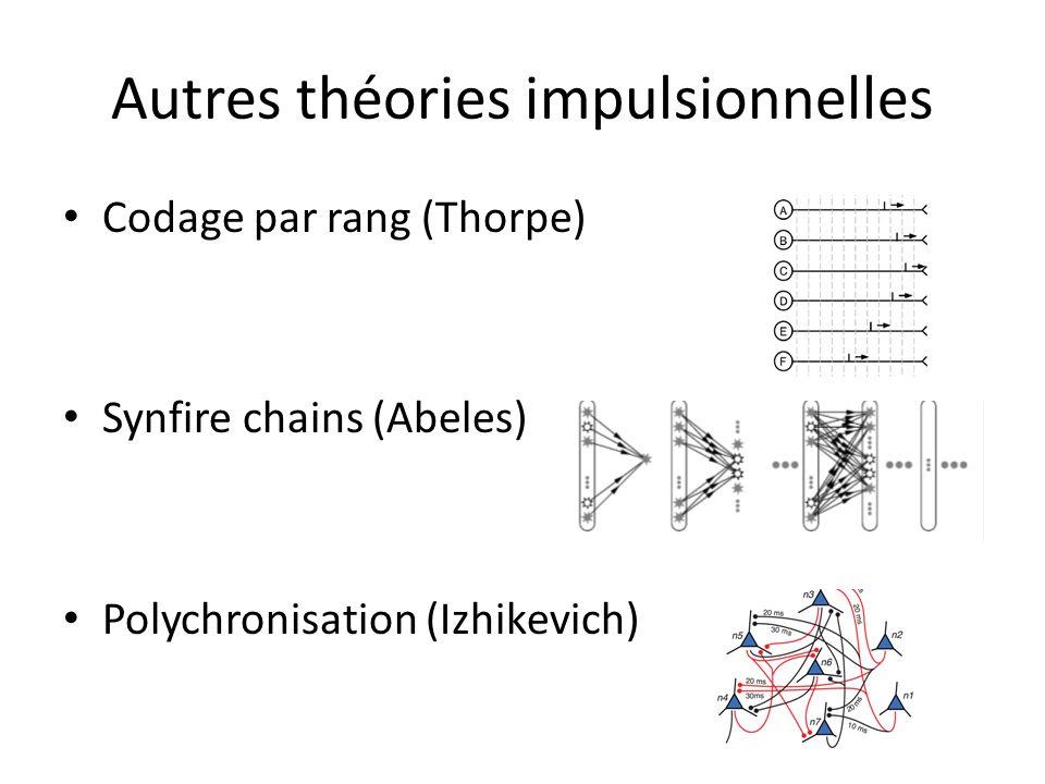 Autres théories impulsionnelles Codage par rang (Thorpe) Synfire chains (Abeles) Polychronisation (Izhikevich)