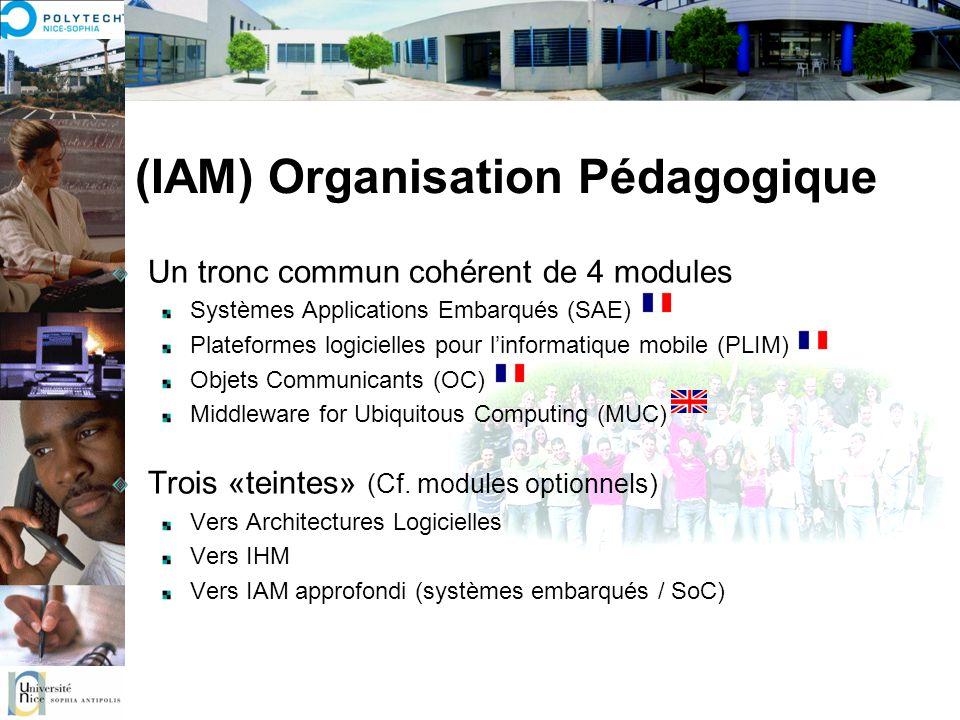 (IAM) Organisation Pédagogique Un tronc commun cohérent de 4 modules Systèmes Applications Embarqués (SAE) Plateformes logicielles pour linformatique