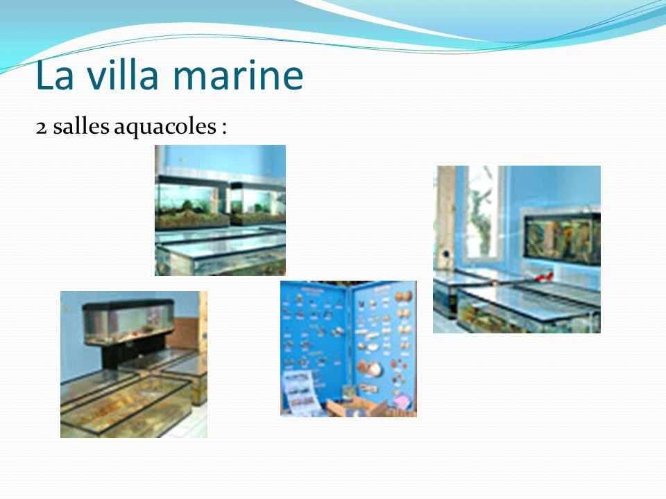 La villa marine 2 salles aquacoles :