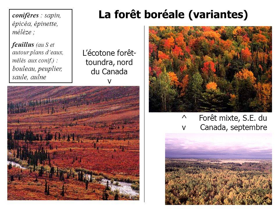 La forêt boréale (variantes) ^ Forêt mixte, S.E. du v Canada, septembre conifères : sapin, épicéa, épinette, mélèze ; feuillus (au S et autour plans d