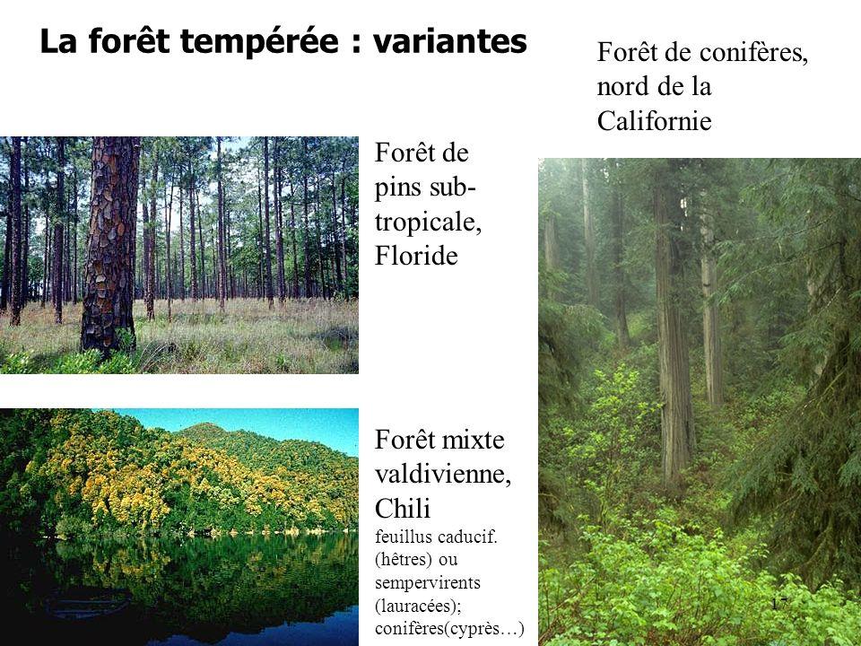 La forêt tempérée : variantes Forêt de pins sub- tropicale, Floride Forêt de conifères, nord de la Californie Forêt mixte valdivienne, Chili feuillus caducif.
