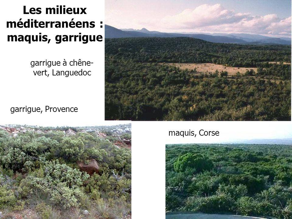 Les milieux méditerranéens : maquis, garrigue garrigue à chêne- vert, Languedoc maquis, Corse garrigue, Provence 20