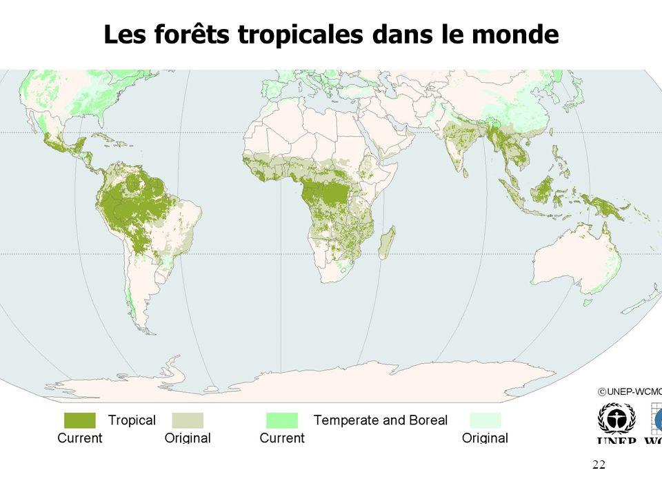 Les forêts tropicales dans le monde 22