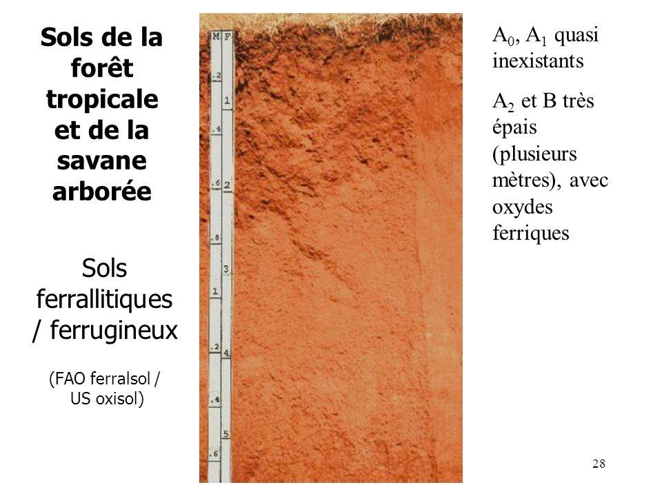 Sols de la forêt tropicale et de la savane arborée Sols ferrallitiques / ferrugineux (FAO ferralsol / US oxisol) A 0, A 1 quasi inexistants A 2 et B t