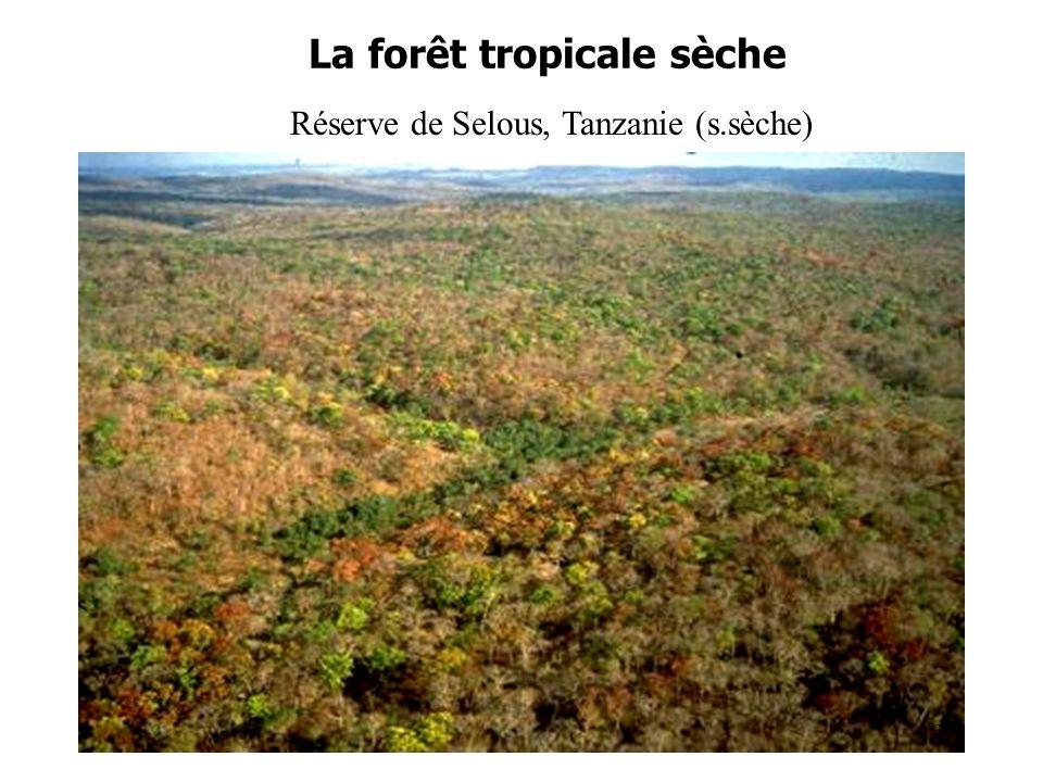 La forêt tropicale sèche Réserve de Selous, Tanzanie (s.sèche) 30