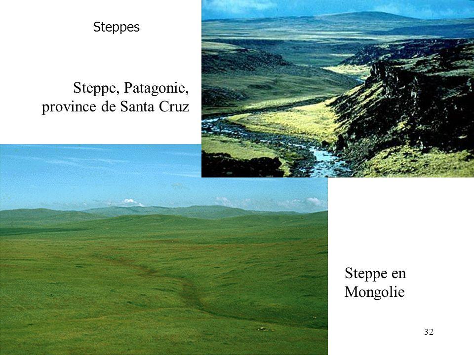 Steppes Steppe en Mongolie Steppe, Patagonie, province de Santa Cruz 32