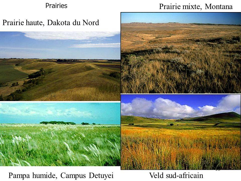 Prairies Prairie mixte, Montana Prairie haute, Dakota du Nord Pampa humide, Campus DetuyeiVeld sud-africain 33