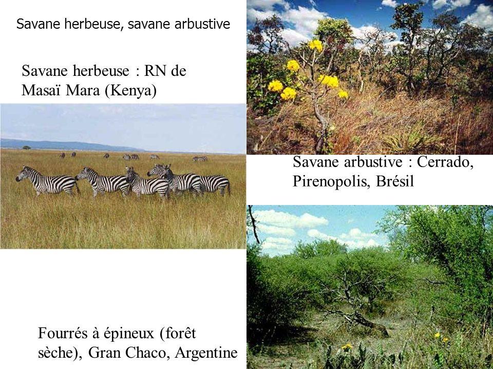 Savane herbeuse, savane arbustive Savane arbustive : Cerrado, Pirenopolis, Brésil Fourrés à épineux (forêt sèche), Gran Chaco, Argentine Savane herbeu